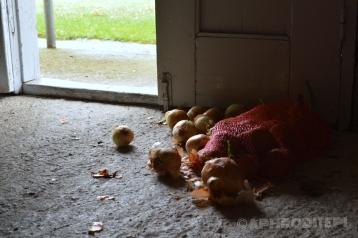 Easy onions