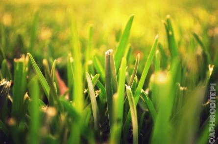 Fresh moaned grass